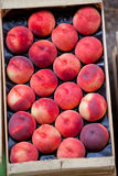 Fresh nectarines selling in a market Stock Images