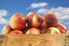 Fresh nectarines in a wooden crate Royalty Free Stock Image