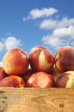 Fresh nectarines in a wooden crate Stock Image