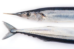 Fresh needlefish for a healthy diet Royalty Free Stock Photography