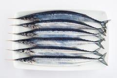 Fresh needlefish for a healthy diet Stock Photos