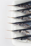 Fresh needlefish for a healthy diet Stock Image