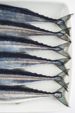 Fresh needlefish for a healthy diet Royalty Free Stock Images