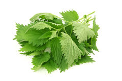 Fresh nettle Royalty Free Stock Photo