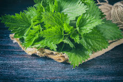 Fresh nettle on a dark background. Selective focus Royalty Free Stock Photos