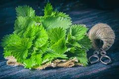 Fresh nettle on a dark background. Stock Photos