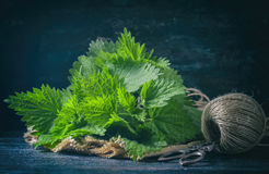 Fresh nettle on a dark background. Stock Photography