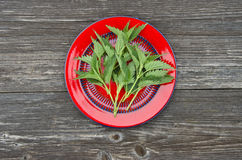 Fresh  nettle herb for healthy ecological food in red plate Royalty Free Stock Images