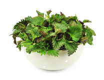Fresh nettle Royalty Free Stock Images