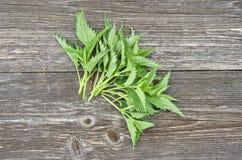 Fresh nettle leaf on wooden background. Fresh healthy nettle leaf on wooden background royalty free stock photography