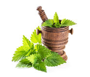 Fresh nettle leaves with a mortar Stock Photos