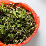 Fresh nettle leaves in a red plastic bag. Photo of fresh nettle leaves in a red plastic bag Stock Images