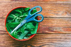 Fresh nettle leaves and scissors on wooden table with copy space. Top view closeup Stock Photo