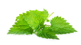 Fresh nettle leaves Royalty Free Stock Images