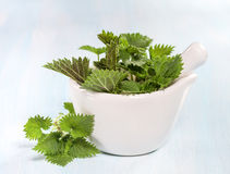 Fresh nettle leaves Royalty Free Stock Photo
