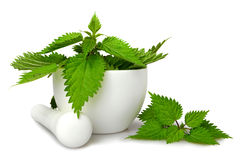 Fresh nettle in a mortar. Isolated on white royalty free stock images