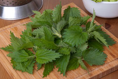 Fresh nettle Stock Image