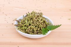 Fresh Nettle seeds royalty free stock photography
