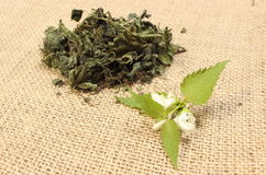 Fresh nettle with white flower and heap of dried plant Stock Images