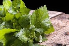 Fresh nettles Stock Photography