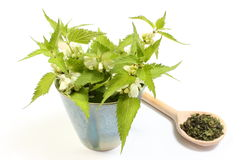 Fresh nettles with white flowers in cup and dried plant Stock Photography