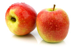 Fresh new apple cultivar called Pink Lady Royalty Free Stock Photography