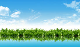 Fresh new grass with water reflection Stock Photos