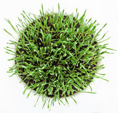 Fresh new green grass Stock Photography