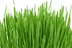 Fresh new green grass background Stock Photo