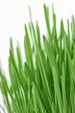 Fresh new green grass background Stock Image