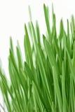 Fresh new green grass background Stock Image