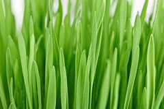 Fresh new green grass background Royalty Free Stock Photo