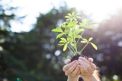 Fresh New Growth Raised Up Stock Photo