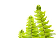 Fresh new leaf in a row, green concept Stock Photo