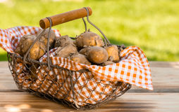 Fresh new potatoes in a metallic basket. Fresh new potatoes in a checkered cloth in a metallic basket, on a wooden table, outdoors Stock Photo