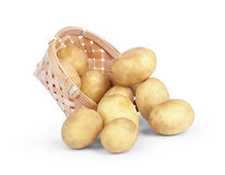 Fresh new potatoes picked in rustic basket Stock Photos