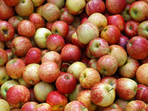 Fresh New Zealand Apples Royalty Free Stock Photos