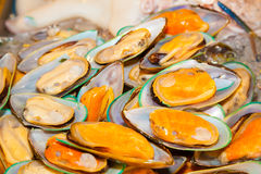 Fresh New Zealand green mussel Stock Photography