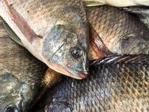 Fresh nile tilapia fish Royalty Free Stock Photo