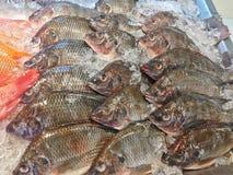 Fresh nile tilapia fish or mango fish or Oreochromis niloticus on iced stall Stock Photo