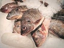Fresh Nile Tilapia Fish on Pile of Ice. At Supermarket Royalty Free Stock Images