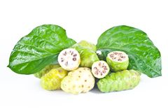 Fresh noni fruit Stock Image