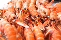 Fresh Norway lobsters close up. Soft focus. Royalty Free Stock Image