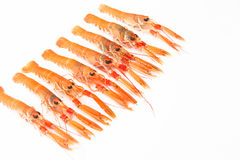 Fresh Norway lobsters on white background. Raw Norway lobster over white surface Stock Photo