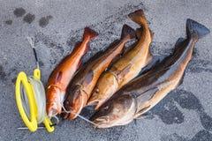 Fresh Norwegian fish Stock Photography