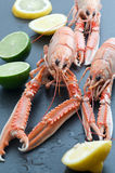 Norwegian Lobster Stock Photos