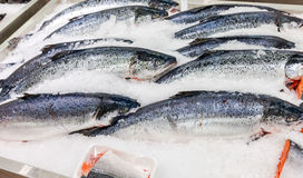 Fresh Norwegian salmon on ice Stock Image