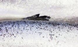 Fresh Norwegian salmon on ice in supermarket Stock Photos