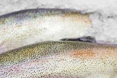 Fresh Norwegian salmon Trout on ice in supermarket Stock Photos