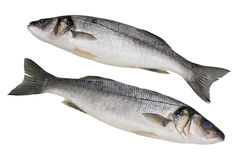 The fresh not cleared  Seabass fish Stock Photography
